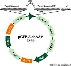 pGFP-A-shAAV Vector