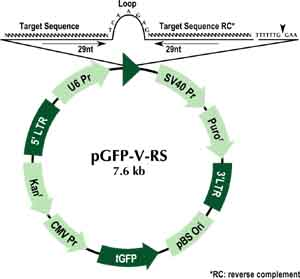 pGFP-V-RS Vector