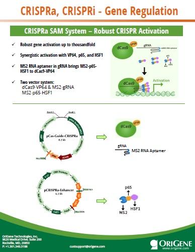 CRISPRa/i
