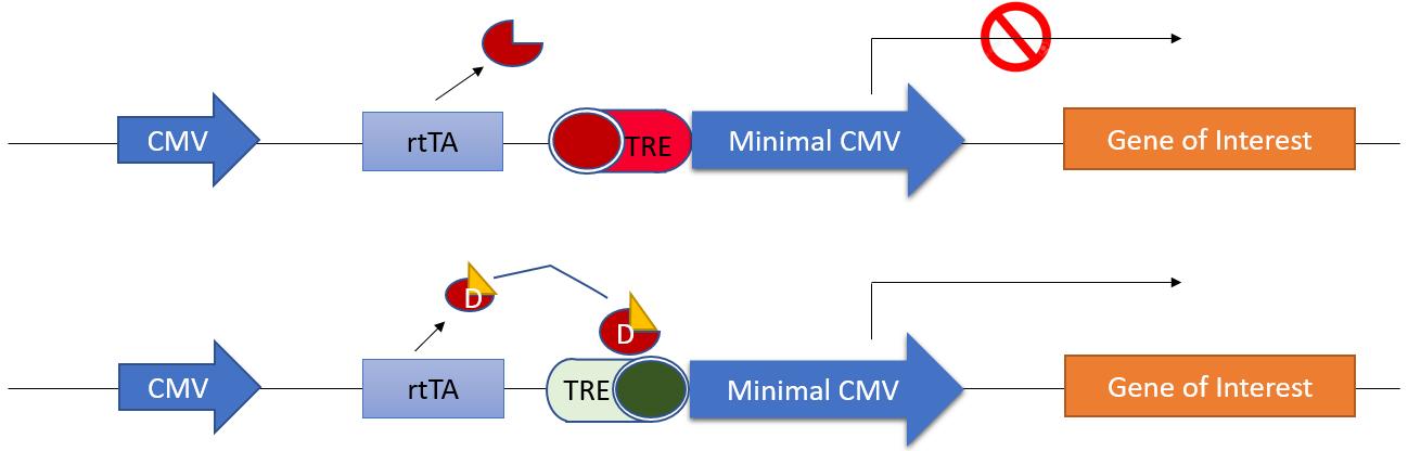 inducible-expression-vectors