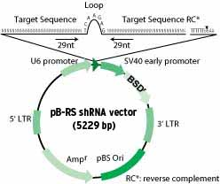 HuSH pGFP-B-RS vector