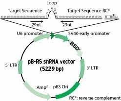 HuSH pGFP-B-RS vector