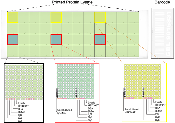 High-Denstity Protein MicroArray Data