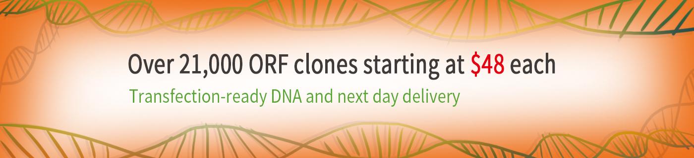 48 ORF Clone Offer