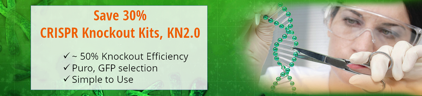 Save 30% on the Improved CRISPR Gene Knockout Kits 鈥� KN2.0