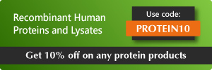 10 percent off protein banner ad