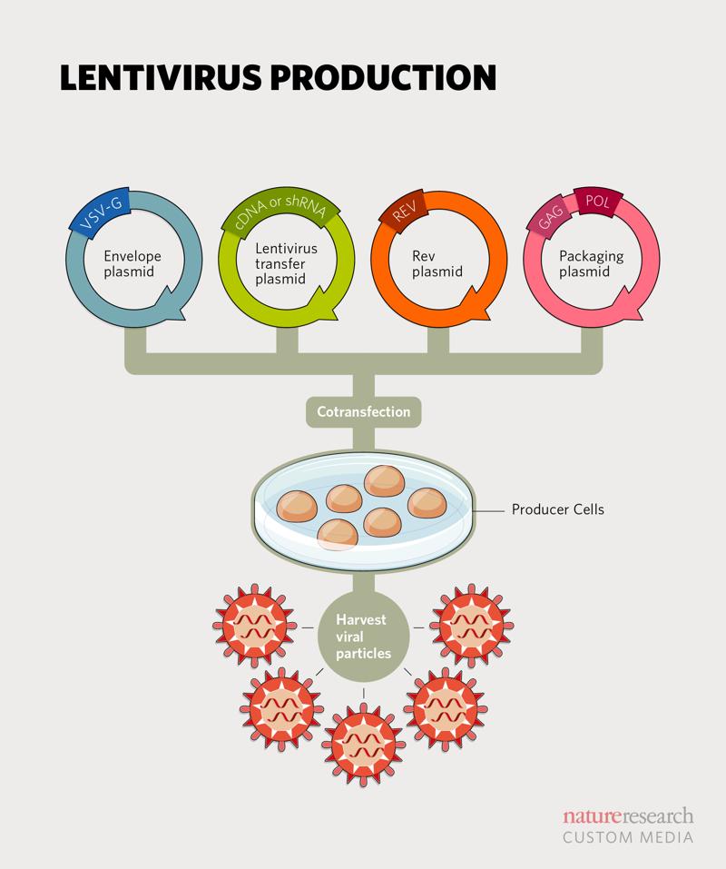 lentiviral diagram