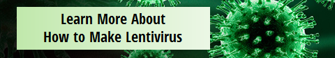 how to make lentivirus