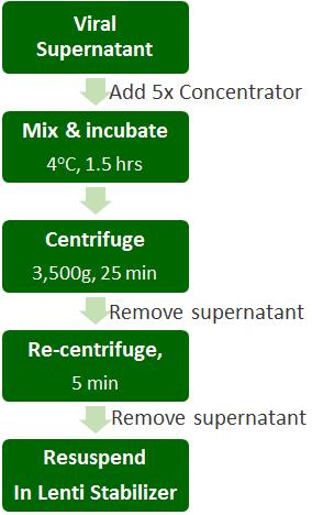 Lentvirus Concentration Storage Data