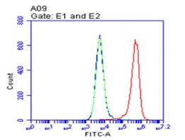 Flow cytometric analysis of CD9 expression in Hela cells using TrueMAB antibody (TA813476)