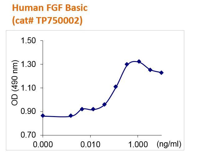 Human FGF Basic