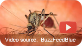 Everything You Need To Know About Zika Virus In 148 s.
