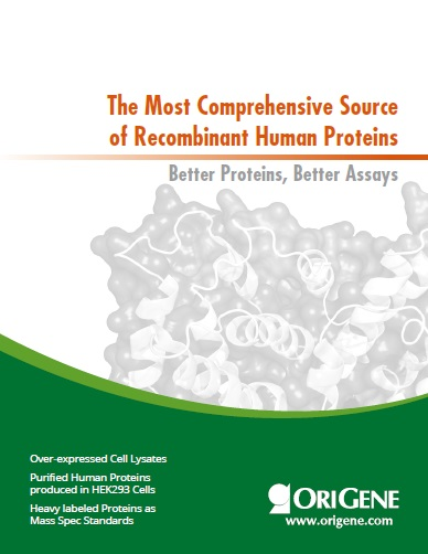 Proteins Brochure