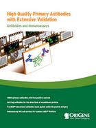 Antibodies Brochure