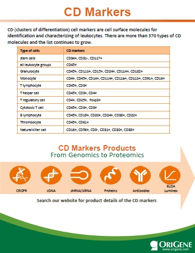 CD Markers flyer