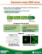 cDNA Brochure