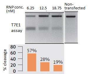 viromer crispr origene cas9 genome-editing