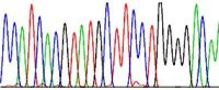 TrueORF Chromatogram