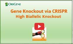 CRISPR knockout Webinar