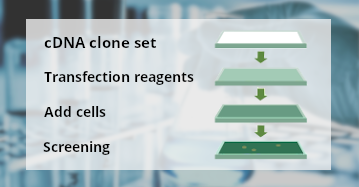 Create your own clone set with OriGene large collection of cDNA clones. Screen hundreds of high quality clones at the same time with a low price.