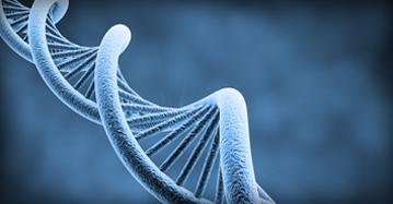 cDNA Clones